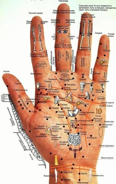 Болезни человека — на его руках будь внимателен — меньше будешь болеть!