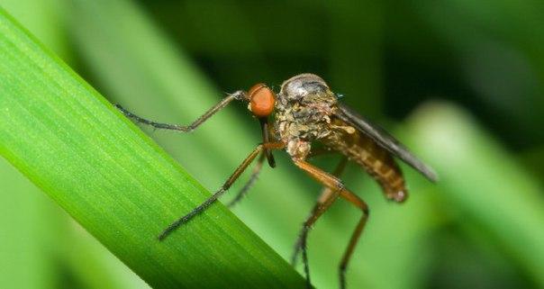 Как спасти детей от комаров? Лучшие советы для мамы!