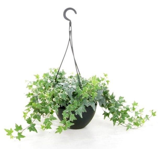 Топ-5 комнатных растений, которые должны быть в каждом доме!